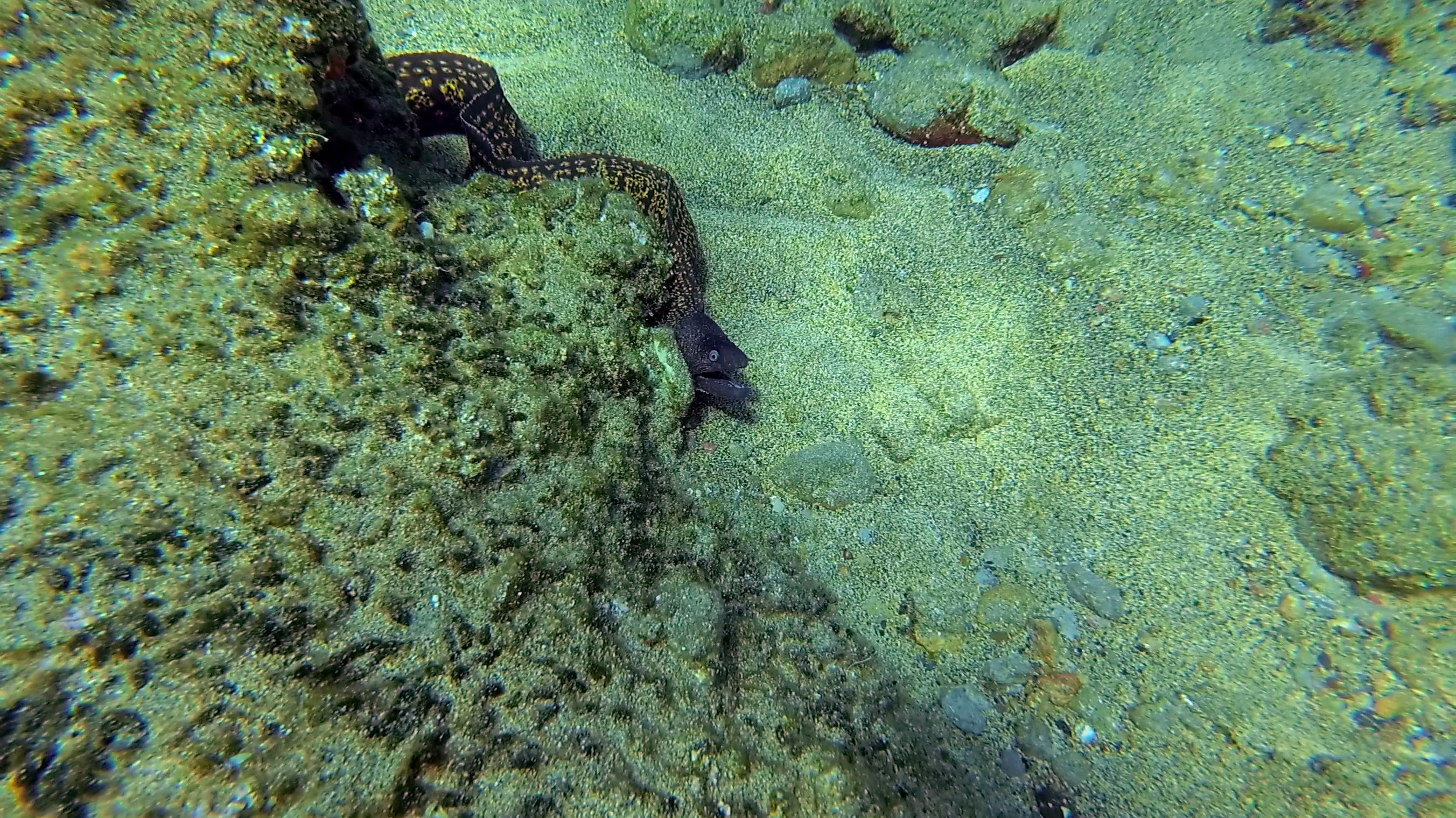 Moray Eel while snorkelling in Falasarna