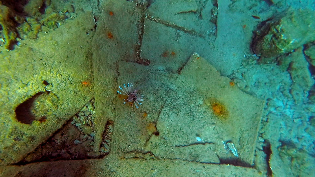 Lionfish on the shipwreck in Falasarna