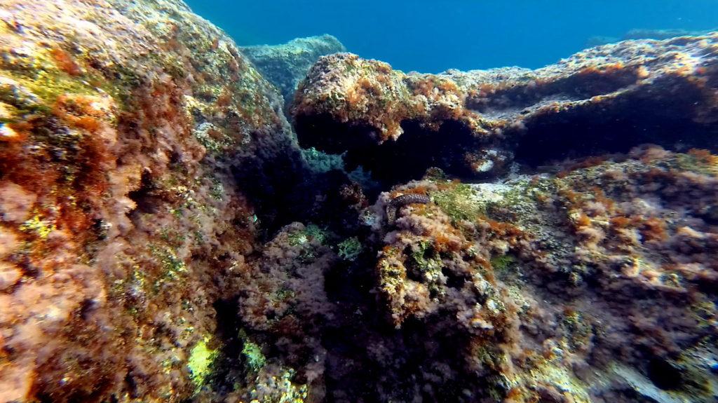 Moray eel in Kissamos