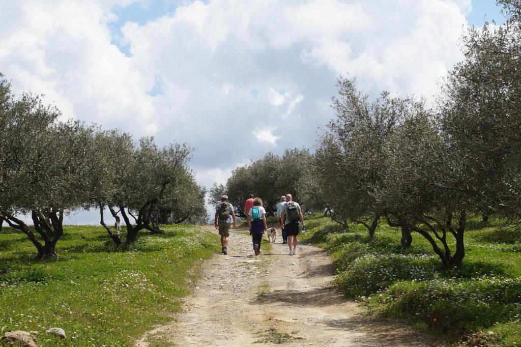 Walkers Olive Grove Crete