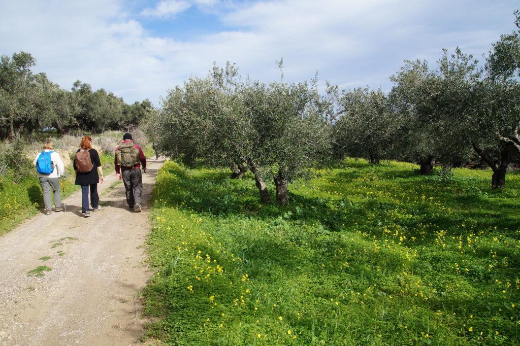 olivegrovewalkers